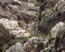 Agosto Curso escalada Malta (81)