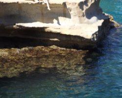 Junio St peters pool (3)
