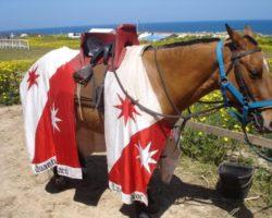 Visitas, turismo y actividades en Malta 2012 (97)