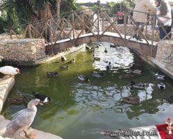 Gozo y Bethlehem (24)