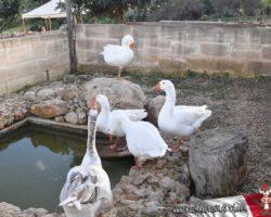 Gozo y Bethlehem (26)