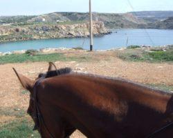 Horse Riding (Mayo 2013) Malta (34)