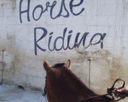 Horse Riding (Mayo 2013) Malta (36)