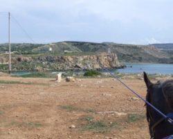 Horse Riding (Mayo 2013) Malta (59)