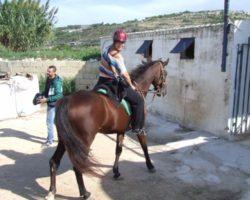Horse Riding (Mayo 2013) Malta (65)