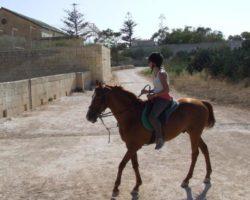 Horse Riding (Mayo 2013) Malta (67)