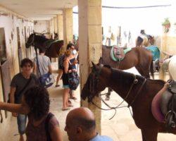 Horse Riding (Mayo 2013) Malta (73)