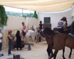 Horse Riding (Mayo 2013) Malta (74)