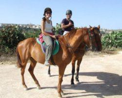 Horse Riding (Mayo 2013) Malta (77)