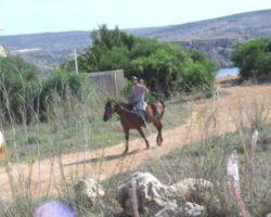 Horse Riding (Mayo 2013) Malta (80)