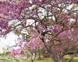 10 Abril Wied il-Ghasel Mosta Malta (3)