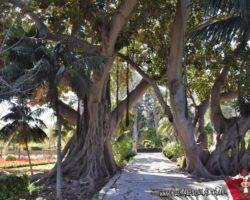 14 OCtubre San Anton Gardens, Mdina, acantilados de Dingli Malta (11)