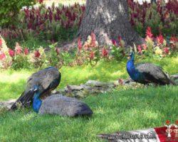 14 OCtubre San Anton Gardens, Mdina, acantilados de Dingli Malta (5)