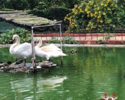 14 OCtubre San Anton Gardens, Mdina, acantilados de Dingli Malta (7)