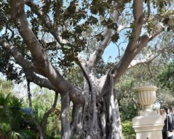 15 Mayo Gardens Tour Malta (25)