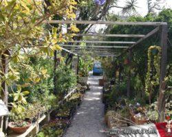 15 Mayo Gardens Tour Malta (30)