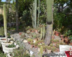 15 Mayo Gardens Tour Malta (31)