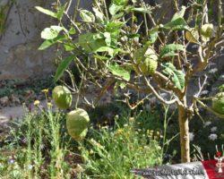 15 Mayo Gardens Tour Malta (37)