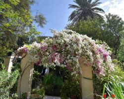 15 Mayo Gardens Tour Malta (44)