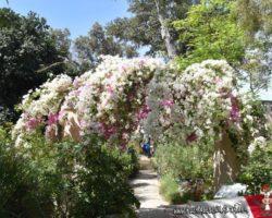 15 Mayo Gardens Tour Malta (45)