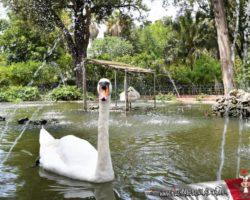 16 Mayo Gardens Tour Malta (25)