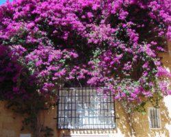 17 Julio Capitales de Malta (38)