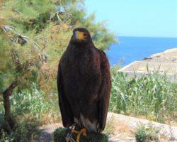 19 Mayo Escapada por el Sur Malta (21)