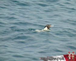2 Junio Escapada por el Sur Malta (72)