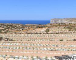 8 Mayo Gozo Malta (5)