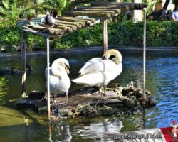 9 Abril St Anton Gardens, Mdina y Dingli Malta (19)