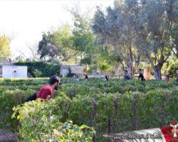 9 Abril St Anton Gardens, Mdina y Dingli Malta (22)