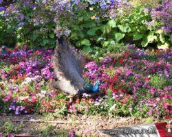 9 Abril St Anton Gardens, Mdina y Dingli Malta (7)