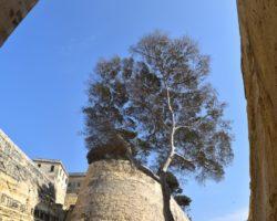 29 marzo Valletta Free Tour 15:30(18)