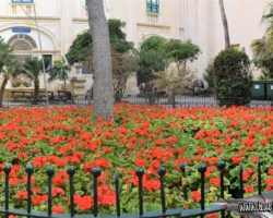 24-26 abril Valletta Free Tours(16)